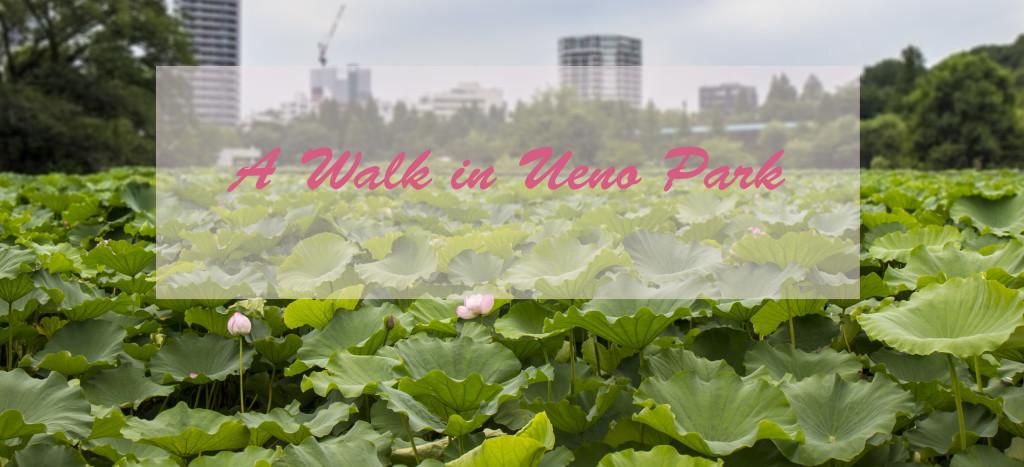 Ueno Park Lotus Flower