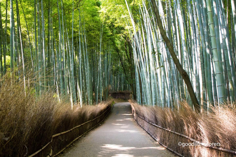 Arashiyama bamboo forest near Kyoto Japan