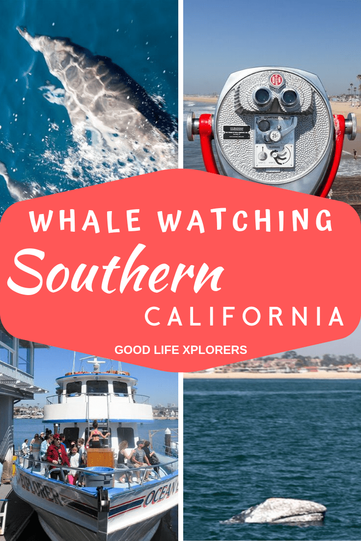 Dolphins and whales in Southern California