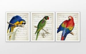 Set of 3 parrot prints on music paper