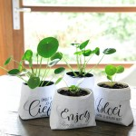Baby Pilea (Pilea peperomioides), how to raise little Pileas