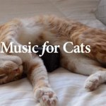 Music for Cats : le premier album pour les chats signé Universal