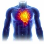 Corwave lève 15,5 millions d'euros pour augmenter l'espérance de vie des patients en insuffisance cardiaque