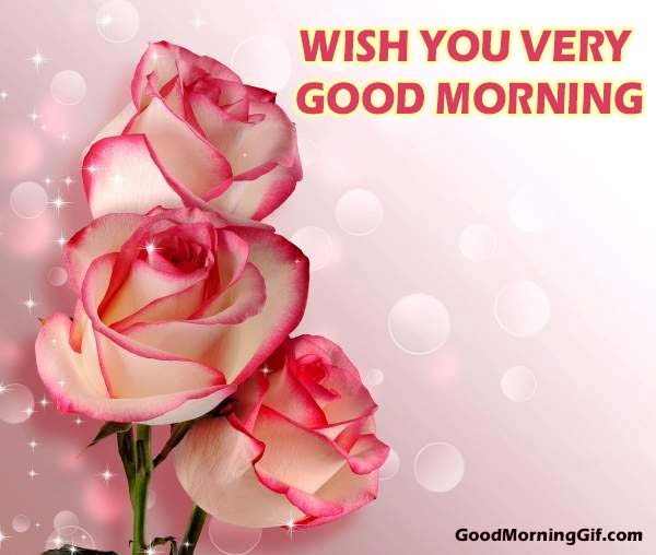Good Morning Flowers Images Amp Good Morning Wishes