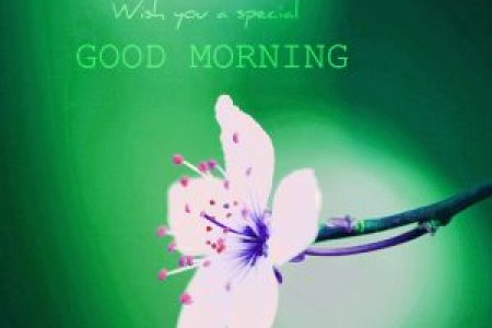 192  Good Morning 3D Photos Images Download Good Morning 3D Images Wallpaper Photos Pictures Free HD Download
