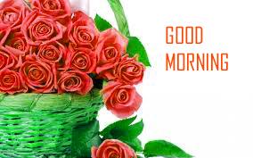 rose flower images hd good morning shareimages co