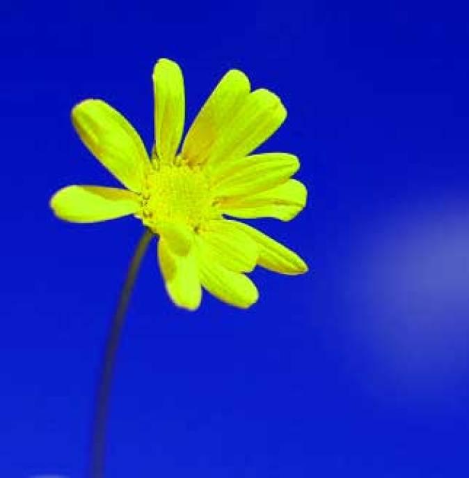 Best Flower For ProFile Download
