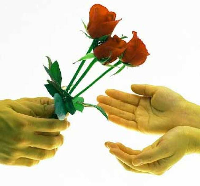 Best Flower For ProFile Hd