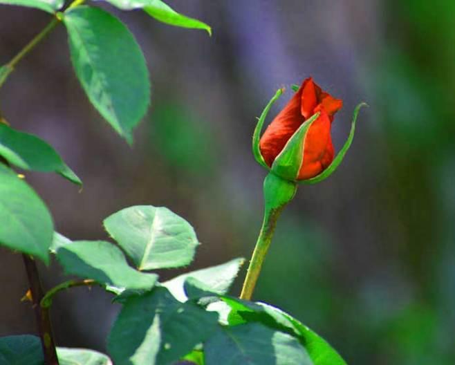 Best Flower For ProFile Images Wallpaper