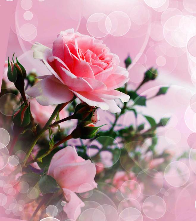 Best Flower Images For ProFile Hd