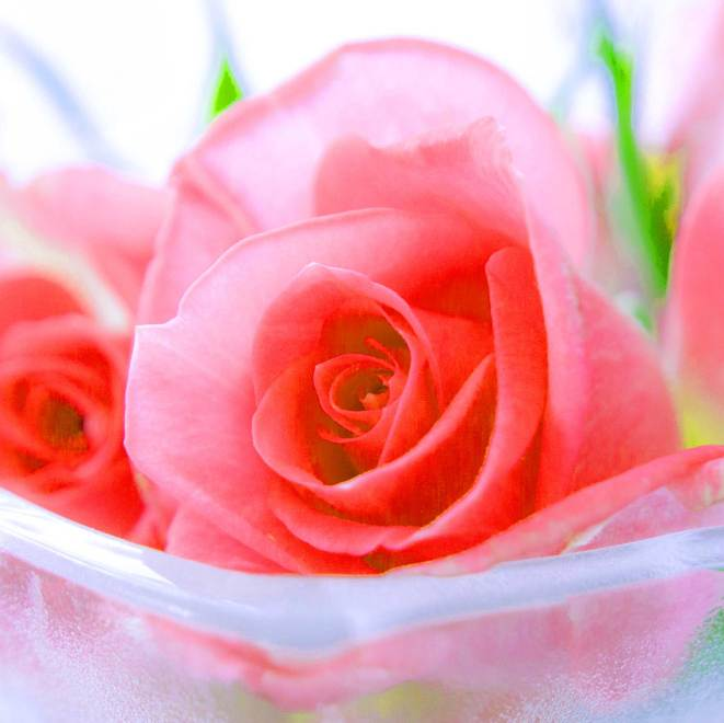 Best Flower Images For ProFile Images