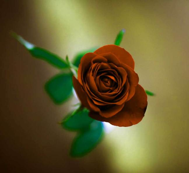 Flower For ProFile Pictures Images