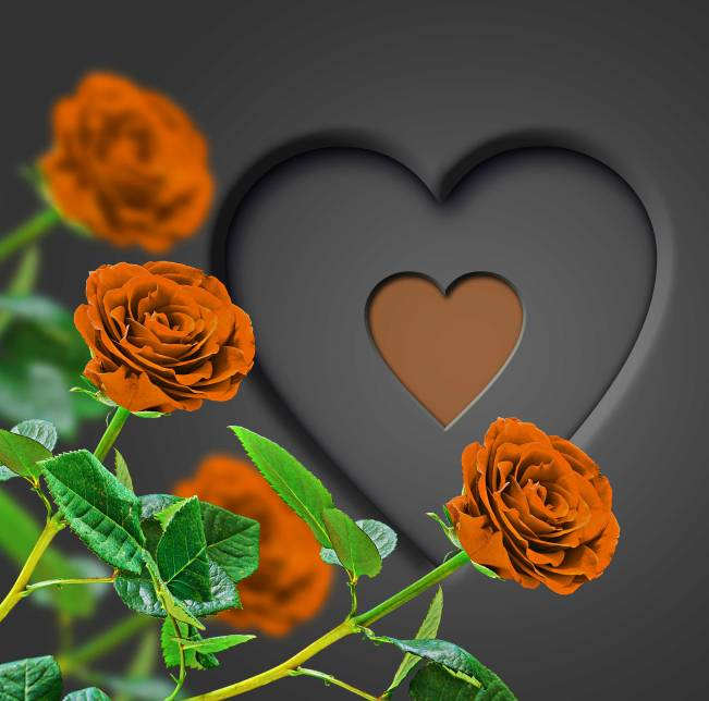 Flower Images For ProFile Photo Images