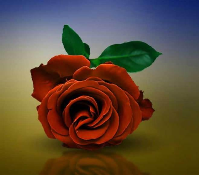 Latest Flower For ProFile Images Free
