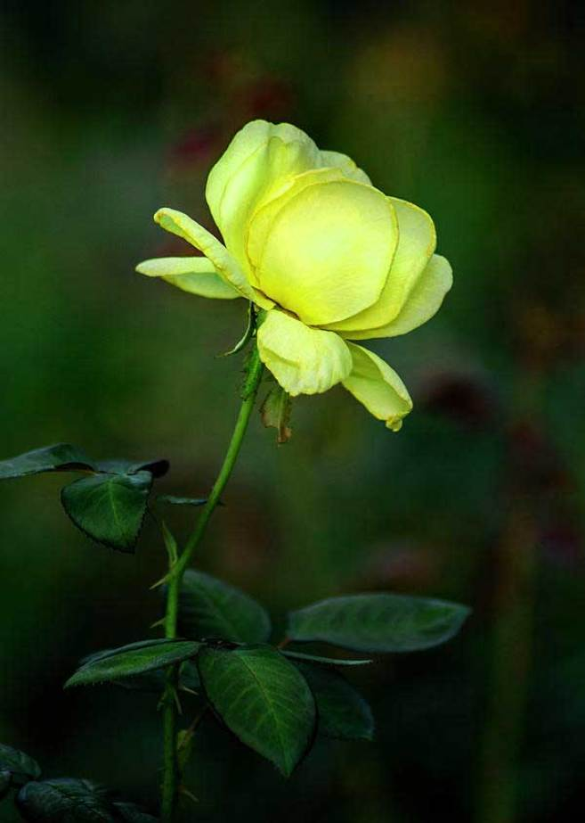 Latest Flower For ProFile Pics Images