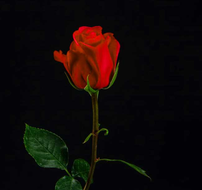 atest Flower For ProFile Download Images