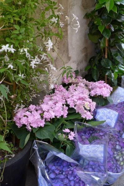 Adriane M. flower shop - hydrangeas