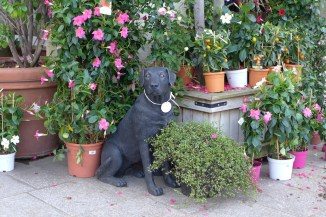 Dog and Flowers at Moulie Paris