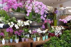 Moulie Flower Shop Paris - Orchids