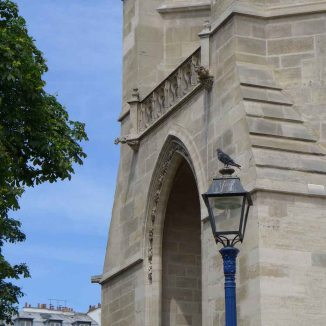 Tour Saint Jacques - Paris- A pigeon