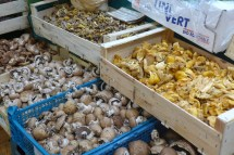 Marche des enfants rouges-Organic Mushrooms
