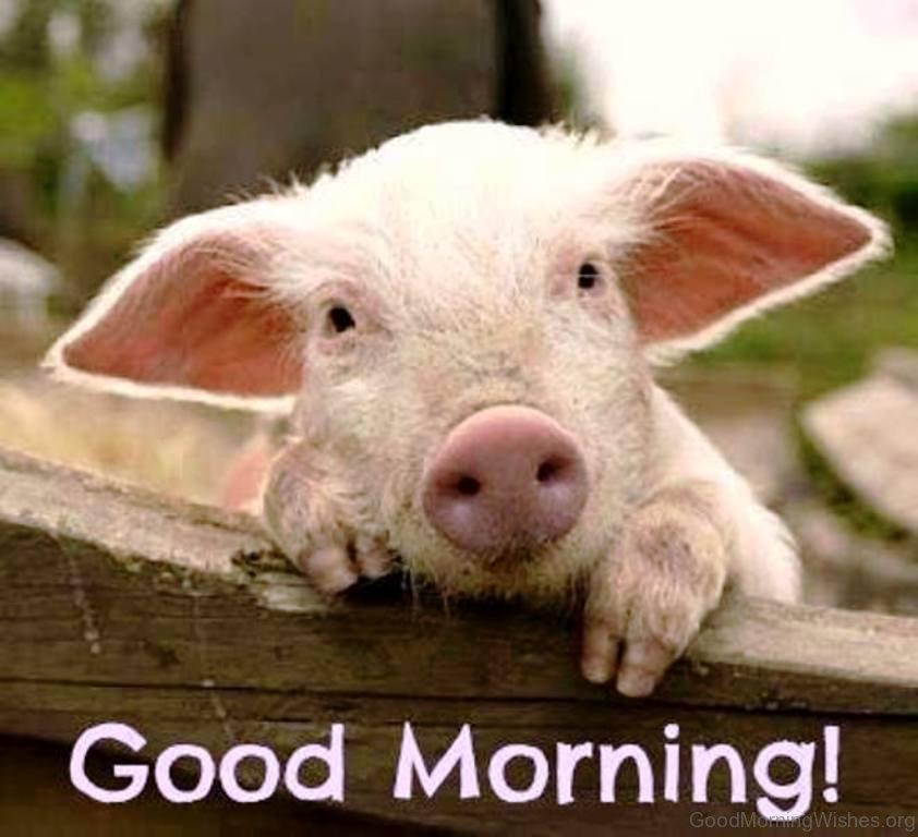 Good Mythical Morning In Spanish : Good morning memes funny
