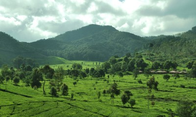 Menikmati Pemandangan Kota Bandung dari Bukit dan Kawasan Perkebunan