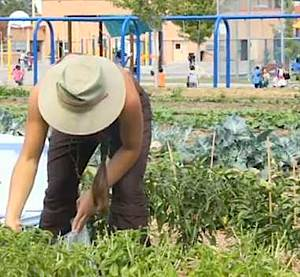 Garden at Denver Green School - Sprout City Farms video