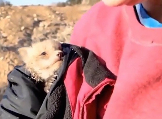 fox-baby-rescued-YouTube.jpg