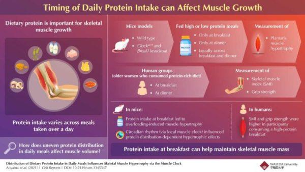 protein-intake-infographic-waseda-university-released-768x432.jpg?resize=600%2C338&ssl=1&profile=RESIZE_710x