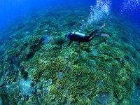 Tubbataha Reef: Crown jewel of Philippine diving