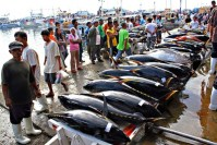 Philippines is the No. 1 tuna exporter to EU
