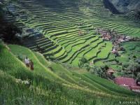 Banaue Rice Terraces access now faster via Clark