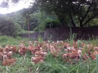 Pamora Farm: Home on the Range