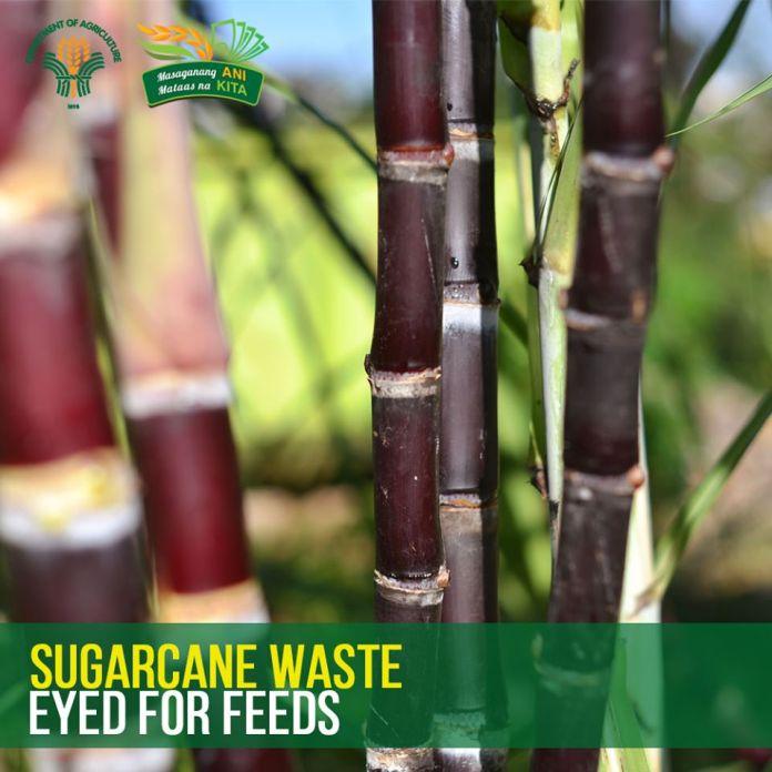 Sugarcane waste