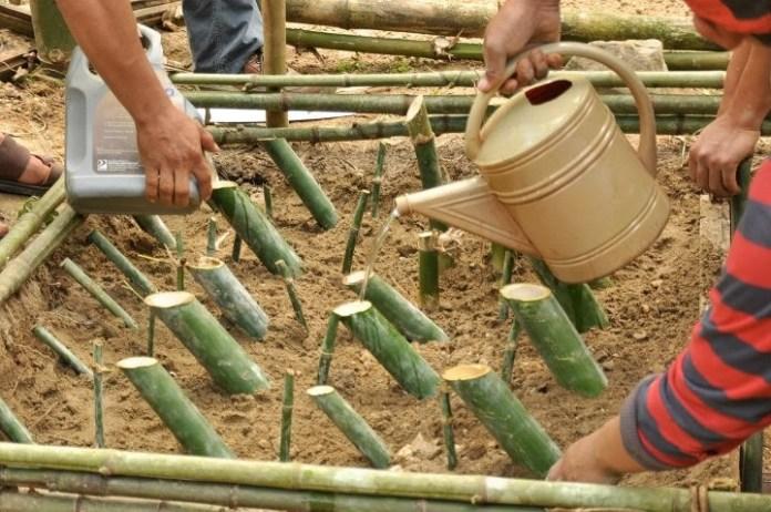 Bamboo high value crop