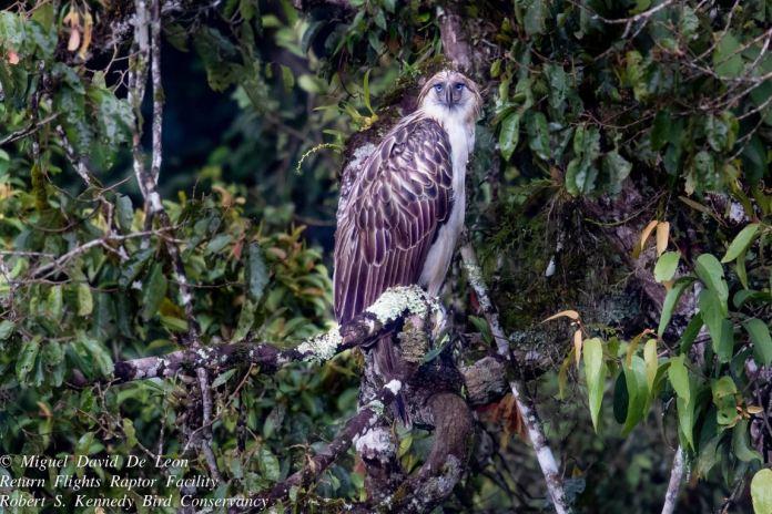 Philippines endemic wildlife