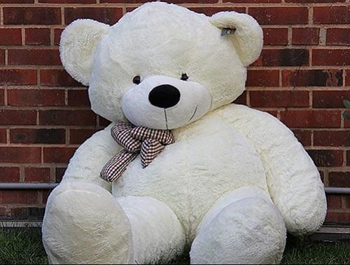 teddy bear HD