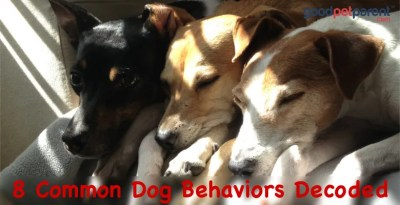 Why Does My Dog Do That? 8 Common Dog Behaviors Decoded.
