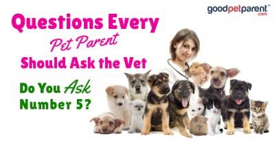 Good Pet Parent: Questions Every Pet Parent Should Ask the Vet