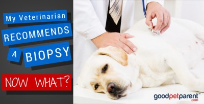 My Veterinarian Recommended a Biopsy - Now What?