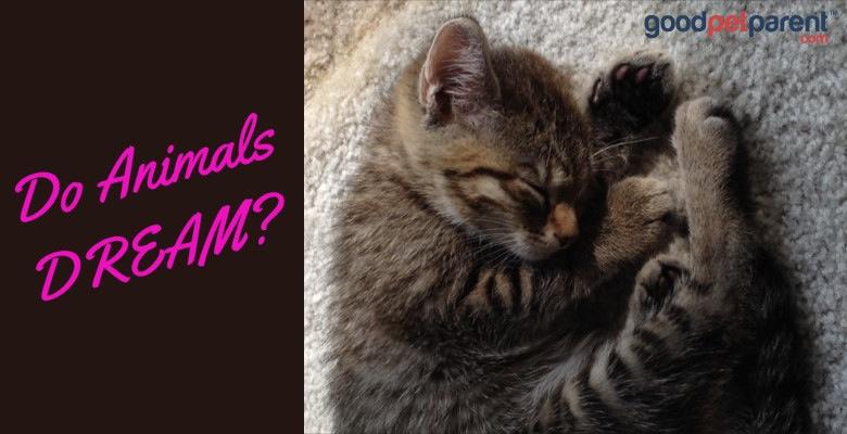 Do animals Dream?