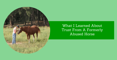 Learned Trust From A Formerly Abused Horse