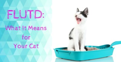 FLUTD: What It Means for Your Cat