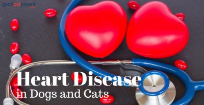 heart disease in dogs and cats feature image