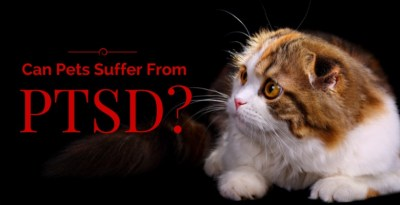 Can Pets Suffer from PTSD?