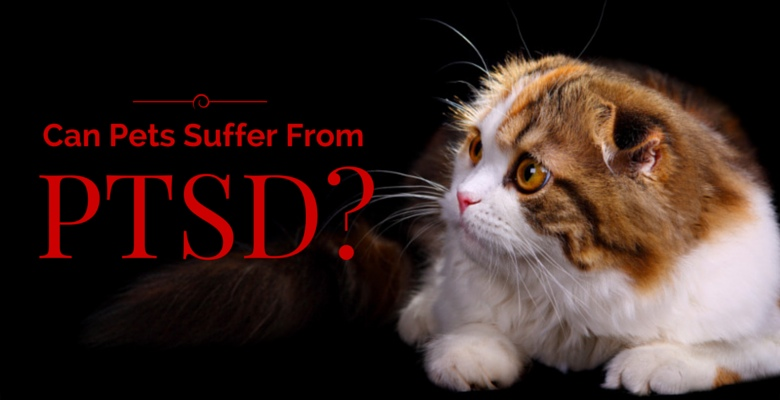 PTSD in Pets Feature Image