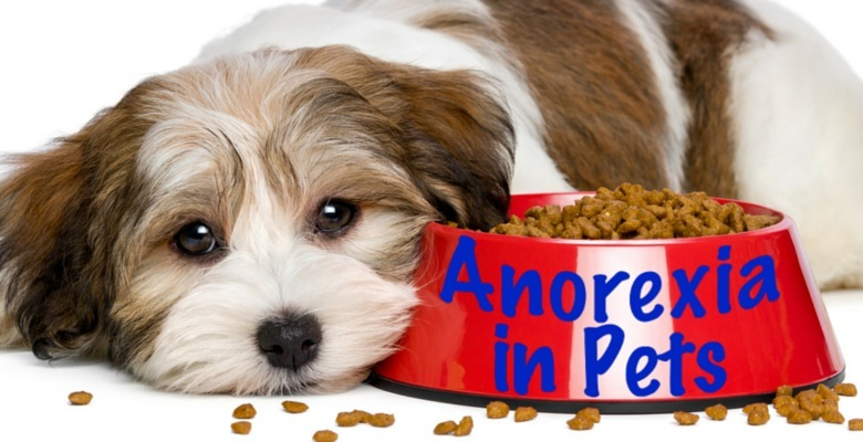 Anorexia In dog