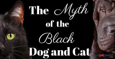GoodPetParent Feature Image - black dog and cat myth