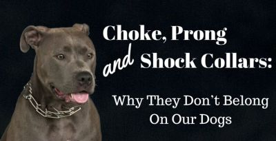 Choke, Prong and Shock Collars: Why They Don't Belong On Our Dogs